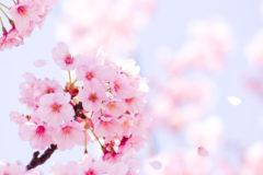 3月20日は春分です
